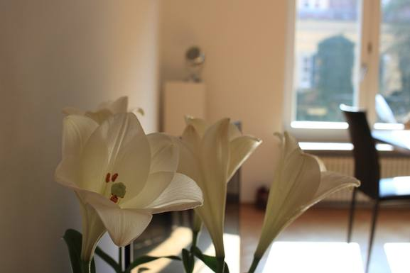 Home exchange country Almanya,München, BY,Exclusive apartment in Munich´s finest area!,Home Exchange Listing Image
