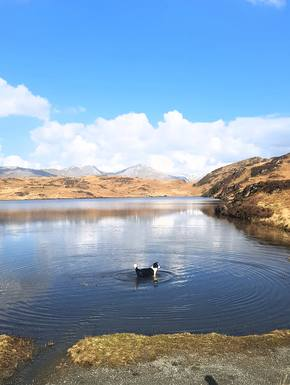 Bostadsbyte i Storbritannien,Coniston Lake District, Cumbria,New home exchange offer in The Lake District,Home Exchange Listing Image
