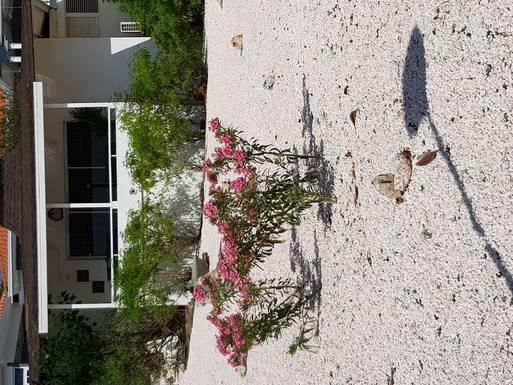 País de intercambio de casas Países Bajos,Curacao, Duth Carribean,New home exchange offer in Curacao Netherland,Imagen de la casa de intercambio