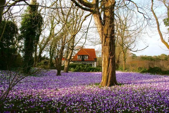 Bostadsbyte i Nederländerna,Schoorl, Noord-Holland,Big detached family house near beach,Home Exchange Listing Image