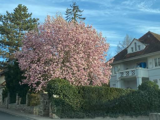 BoligBytte til Tyskland,Alsbach, Hessen,New home exchange offer in Alsbach  Germany,Boligbytte billeder