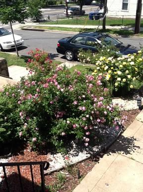 BoligBytte til USA,Washington, DC,New home exchange offer in Washington  DC,Boligbytte billeder