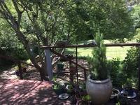 back deck overlooks back garden
