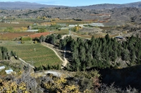 Bostadsbyte i Nya Zeeland,Alexandra, ALEXANDRA,Central Otago home and orchard,Home Exchange Listing Image