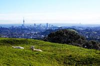 BoligBytte til New Zealand,One Tree Hill, Auckland,15 mins to CBD, 15 mins to Airport,Boligbytte billeder