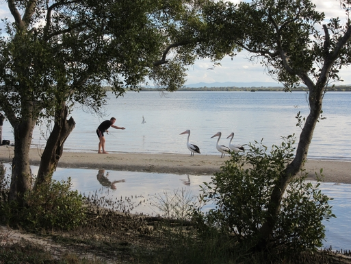 Home exchange in,Australia,Banksia Beach, Bribie Island,Pelicans being tempted with fish at Banksia Beach