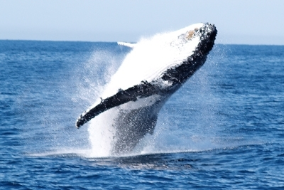 Home exchange in,Australia,Kingscliff,Migrating Whales - (watch them from our balcony)