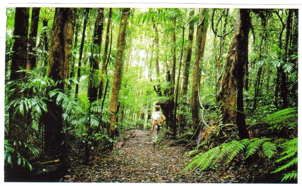 Home exchange in,Australia,Kingscliff,Subtropical Rainforest - Springbrook National Park