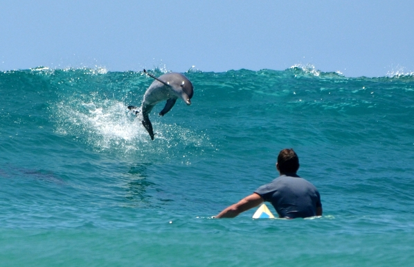 Home exchange in,Australia,Kingscliff,Surfing with the Dolphins - Kingscliff