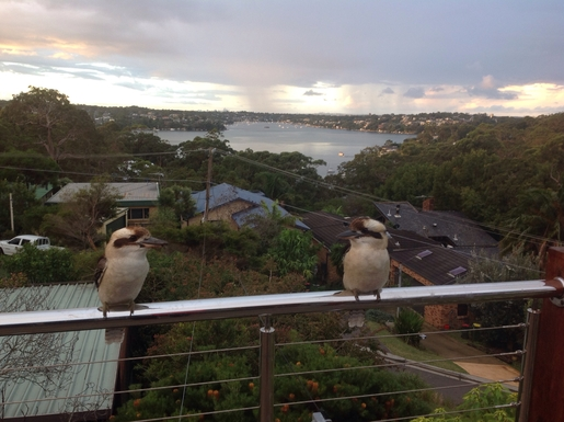 Home exchange in,Australia,MAIANBAR,Lots of birds! The view is always changing