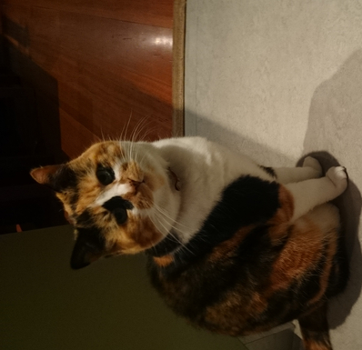 Home exchange in,Australia,Burleigh Heads,Kitsy Lyra, resident 10 year old cat