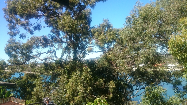 Home exchange in,Australia,Burleigh Heads,View through trees to creek from deck