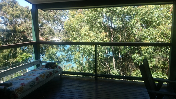 Home exchange in,Australia,Burleigh Heads,Cat with view to creek from deck