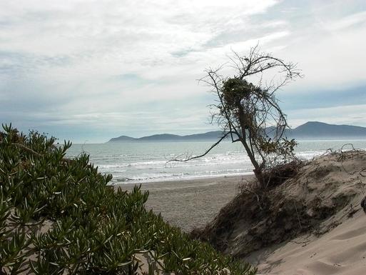 BoligBytte til,New Zealand,Wellington, 48k, N,beach from Queen Elizabeth Park (10 min walk)