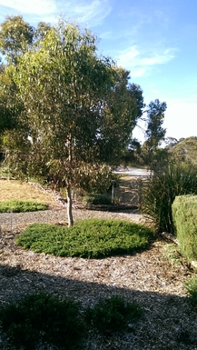 Home exchange in,Australia,Mosquito Hill,Front garden