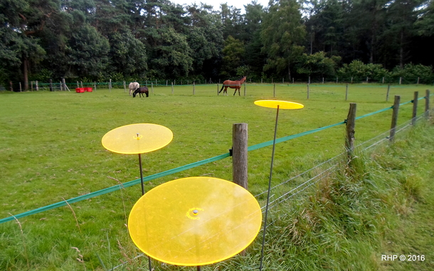BoligBytte til,Netherlands,Austerlitz , 60km SE of Amsterdam,Riding school horses in 50 m adjacent meadows.