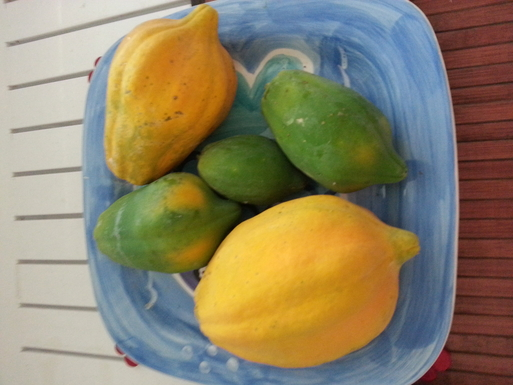 BoligBytte til,Australia,Magnetic Island,pick your own fruit from our garden