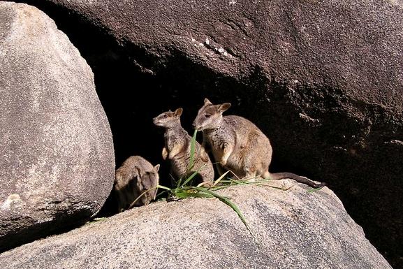 BoligBytte til,Australia,Magnetic Island,Boligbytte billeder