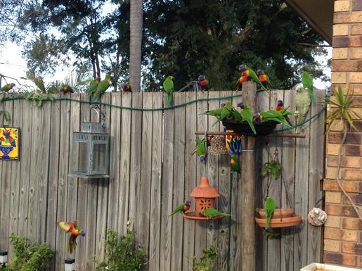 Home exchange in,Australia,Cornubia,Rainbow Lorikeets visiting the garden