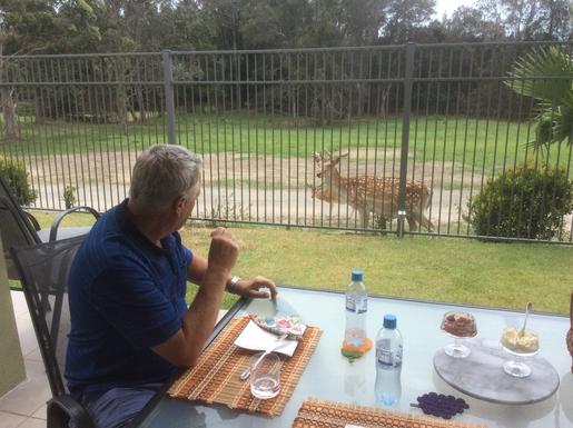 Home exchange in,Australia,Merrimac,Dining with the deer