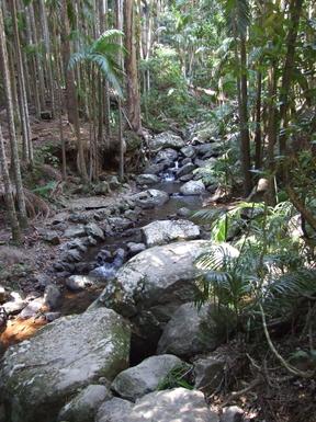 Home exchange in,Australia,Cornubia,Mt Tamborine Rainforest a pleasant hours drive