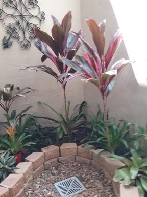 Home exchange in,Australia,RUNAWAY BAY,Courtyard garden adjacent to the guest bedroom