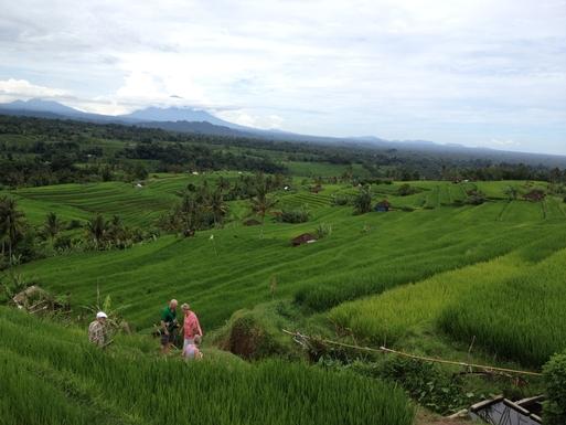 Home exchange in,Indonesia,Legian,The Rice paddies in Jati Luwih