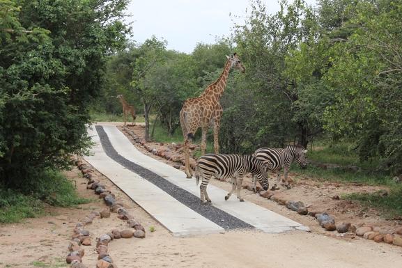 BoligBytte til,South Africa,Hoedspruit,Driveway