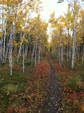 Home exchange in,Canada,Whitehorse,Millennium Trail across the street - Fall colours