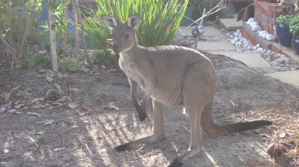 BoligBytte til,Australia,Aldinga Beach,Boligbytte billeder
