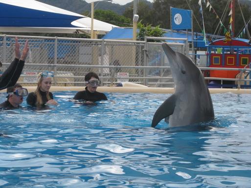 Home exchange in,Australia,Korora,Swim with the dolphins @ Marine Magic