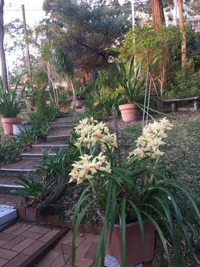 Home exchange in,Australia,DALEYS POINT,Garden