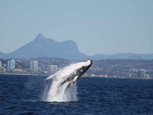 Home exchange in,Australia,gold coast,Mt Warning and Whale watching
