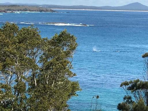 Home exchange in,Australia,WOOLGOOLGA,Whales seen from our top deck on 12/11/2017
