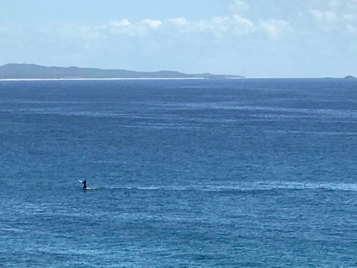 Home exchange in,Australia,WOOLGOOLGA,Whale breaching in front of our house.