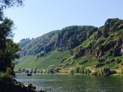 BoligBytte til,Germany,Burg Mosel,River Mosel in Burg with wine yards