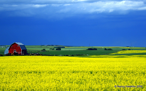 Huizenruil in  Canada,Ponoka, Alberta,Experience rodeo country!,Home Exchange Listing Image
