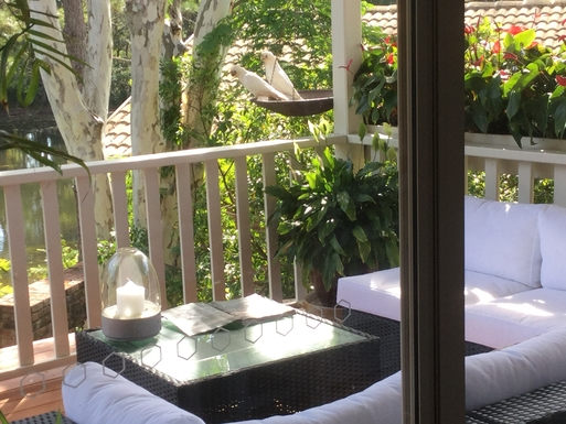 Home exchange in,Australia,Coffs Harbour,Fly in visitors to our deck