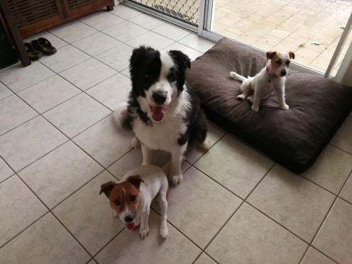 Home exchange in,Australia,Trinity Beach,Our gorgeous fur-kids - Bailey, Max & Millie  :)