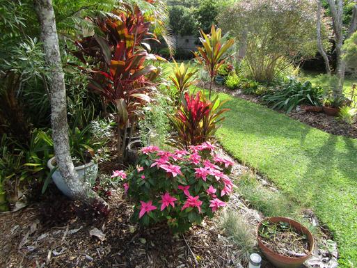 Home exchange in,Australia,VALLA BEACH,Front garden.