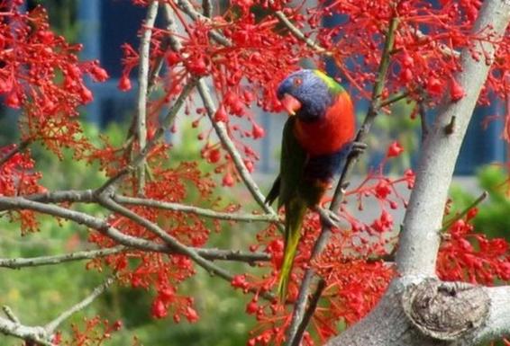 Home exchange in,Australia,Brisbane CBD,,Local Birdlife
