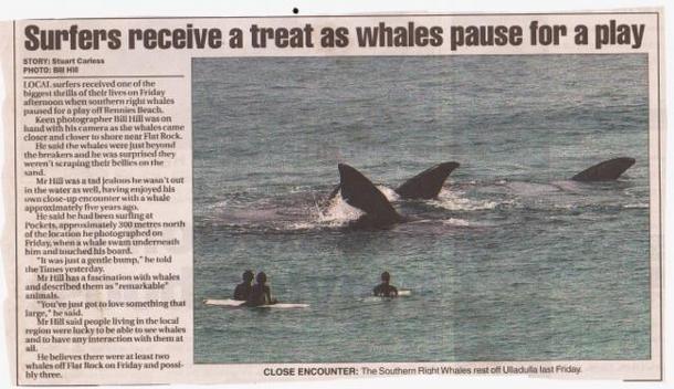 Home exchange in,Australia,ULLADULLA,Whales visit Rennies Beach