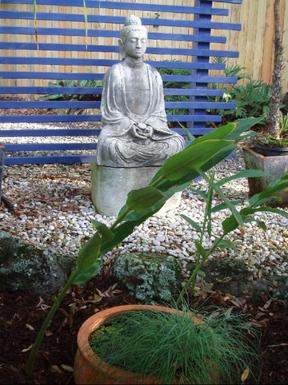 Home exchange in,Australia,BYRON BAY,Our garden