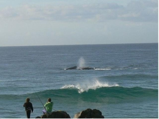 Home exchange in,Australia,POTTSVILLE,Pottsville whale watching from nearby headland.