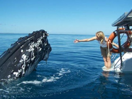 Home exchange in,Australia,URANGAN,Get up close to the Humpback Whales