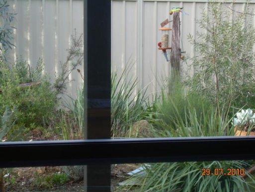 Home exchange in,Australia,STRATHFIELDSAYE,Native Parrots which visit when we provide seed!