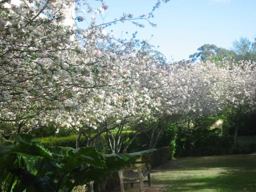 Home exchange in,Australia,MOSMAN,Spring time in our gardens