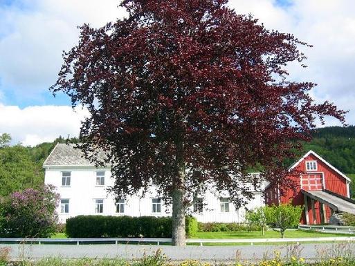 Home exchange in Norway,Trondheim, 20k, S, Melhus,Norway - Trondheim, 20k, S - House (2 floors+,Home Exchange & House Swap Listing Image