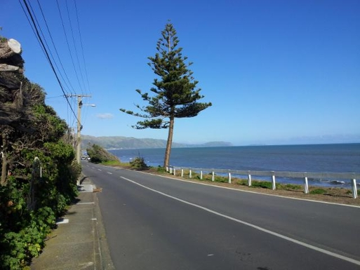 BoligBytte til,New Zealand,Wellington, 50k, N,great cycling along the sea front