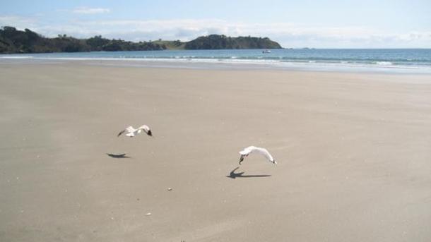 Wohnungstausch oder Haustausch in Neuseeland,Auckland, Auckland,Waiheke Island- Vineyards and Beach,Home Exchange Listing Image